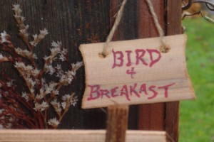bird-and-breakfast-003