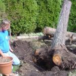 Big Root