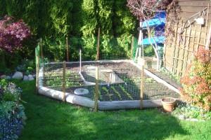 Small space veggie garden