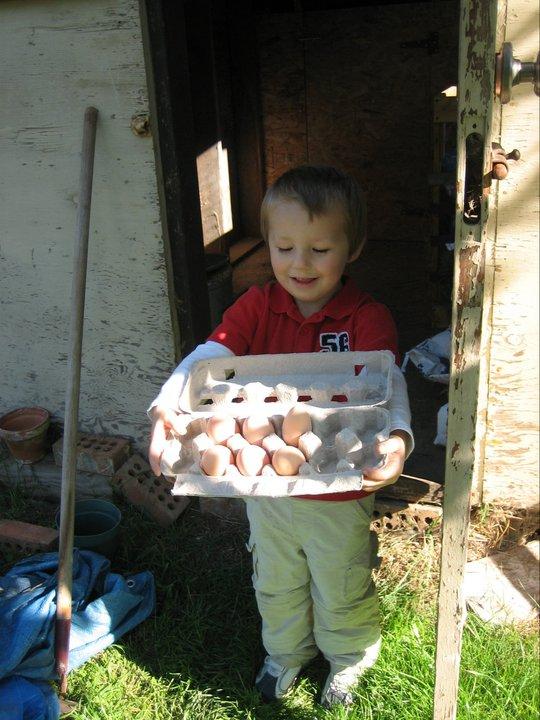 Our little egg gatherer!